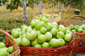 Apples in baskets — Stock Photo
