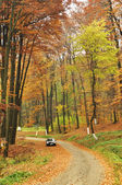 Small car in forest with high trees — Stock Photo