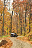 Car in the forest — Stock Photo
