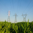 Electricity pylons in a field - Stock Photo