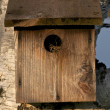 Stock Photo: Wood Birdhouse