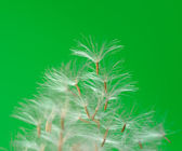 Green palm leaf — Foto Stock
