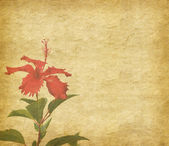 Chinese hibisci Rosae-Sinensis Flower with set of abstract painted background — Stock Photo