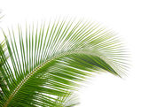Green palm leaf — Stockfoto