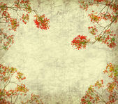 Peacock flowers on tree with Old antique vintage paper background — Stock Photo