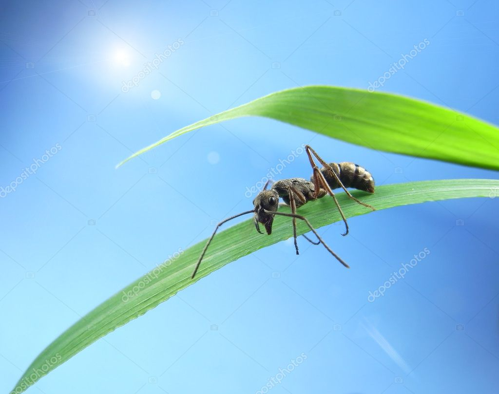 Ants on a green grass — Stock Photo #7871975