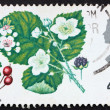 Postage stamp GREAT BRITAIN 1967 Hawthorn and Wild Blackberry — Stock Photo #7044574