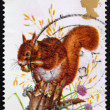Postage stamp GREAT BRITAIN 1977 Red squirrel — Stock Photo