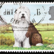 Postage stamp GREAT BRITAIN 1978 Old English sheepdog — Stock Photo