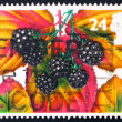 Postage stamp USA 1993 Blackberries - Foto de Stock