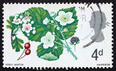 Postage stamp GREAT BRITAIN 1967 Hawthorn and Wild Blackberry — Stock Photo