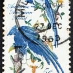 Postage stamp USA 1963 Columbia Jays — Stock Photo #7208772