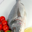Gilthead fish — Stock Photo