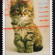 Stock Photo: Postage stamp GB 1990 Prevention of Cruelty to Animals
