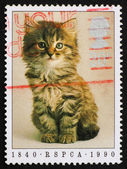 Postage stamp GB 1990 Prevention of Cruelty to Animals — Stock Photo