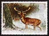 Postage stamp GB 1992 Fallow deer, Animals in Winter — Stock Photo