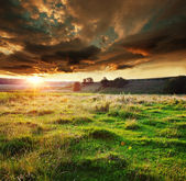 Grassland on sunset — Foto Stock