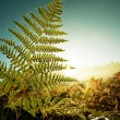 Fern — Stock Photo #7638876
