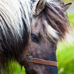 Horse — Stock Photo #7638932