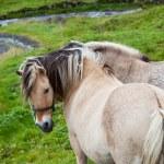 Horse — Stock Photo #7638935