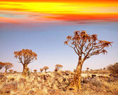 African landscapes — Stock Photo