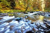 Río otoñal — Foto de Stock