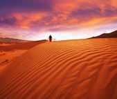 Hike in desert — Foto Stock