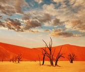 Namib — Stockfoto