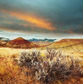 łąka — Zdjęcie stockowe