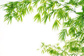 Bamboo leaves High resolution image of wet bamboo-leaves isolated on a white background with clipping path — Stock Photo