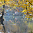 Mountain river in beechen autumn wood — Foto Stock