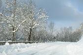 Neve appena caduta — Foto Stock