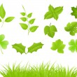 Green branches and grass — Stock Vector