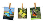Photos with butterfly — Stock Photo