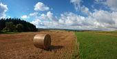 Hay harvest — Stock Photo