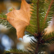 Autumn leaf - Stockfoto