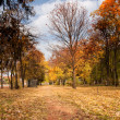 Autumn scenery — Stock Photo #7563229