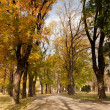 Autumn scenery — Stock Photo #7563242