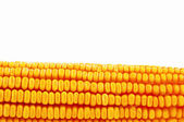 Corn ear — Stock Photo
