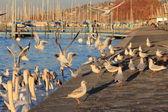 Birds and lake — Stock Photo