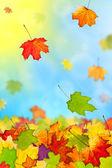 Falling colorful autumn leaves — Стоковое фото