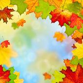 Renkli sonbahar yaprak çerçeve — Stok fotoğraf