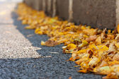 Yellow autumn leaves on asphalt — Stock Photo