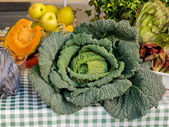 Savoy cabbage on display — Stock Photo