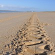 Tire marks in the sand — Stock Photo #6910125