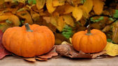 Pumpkins front of foliage — Stock Photo