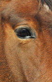 Close eye on a horse — Stock Photo