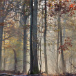 Mist in automn - Stock Photo