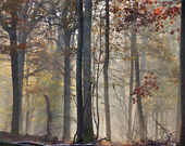 Mist in automn — Stock Photo
