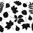 Stock Vector: Set of silhouettes of leaves.